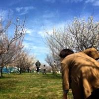 3/25(土)梅の郷ドッグランの春祭り♪