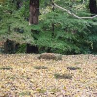 秋の紅葉ナナと・・第一弾