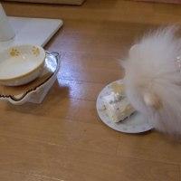 ☆ ロールケーキ ☆