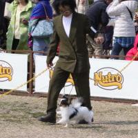 北関東インターナショナルドッグショー