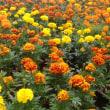 ひだまり農園の春