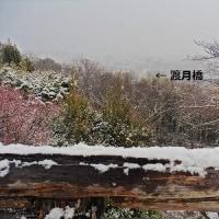 雪の 虚空蔵 法輪寺