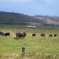 牧場の牛と馬さん