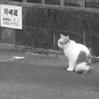 河崎(伊勢)一箱古本市 2016