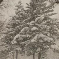 雪・ゆき・雪