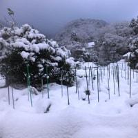 一面雪景色、厳寒の保温効果は…