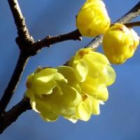寒空のもとで咲く(一)