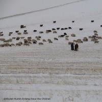 MONGOLIAN HERDERS FACE HARSH WEATHERモンゴル大雪で遊牧民の生活深刻