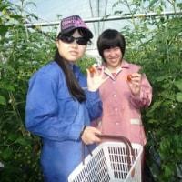 今日は朝からみんなでミニトマトを収穫しましたっ♪