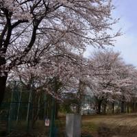 廃校の小学校最後の姿と桜と富士山~大月市