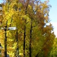 京都の紅葉と『PON!』で「あゝ、荒野」