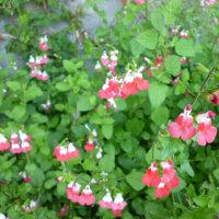 散歩中のお花