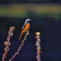 緑地の野鳥