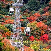 小豆島/寒霞渓の紅葉