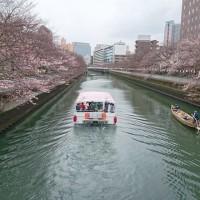 4月1日の花見は3分咲き