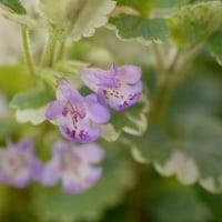 グレコマの花。。 そして隣りに,そっくりさん^^