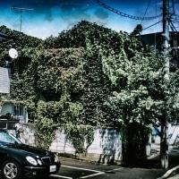 【Aug_17】裂開する緑_OVERGROWTH#5