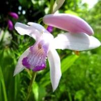 蒼とムラサキの花になぜか 懐かしさを