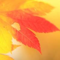Almost full autumn