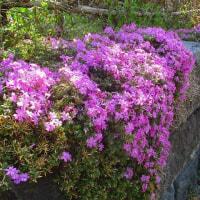 日記(3.30)花