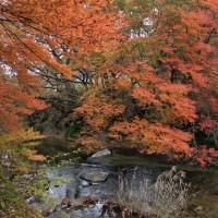 11月28日 水辺の紅葉