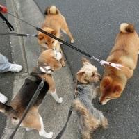 まのヴィキのお散歩の後はグーもお散歩