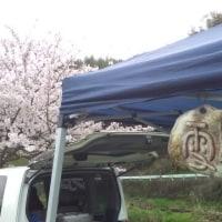 宮川朝市&お花見