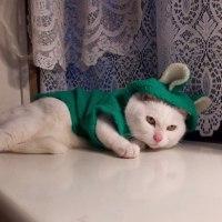 2月22日 猫の日ですね