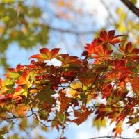 2016年 初冬の日本庭園と紅葉 / Love Story (ある愛の詩)
