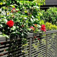 「写真&俳句!」花さうび隣の垣も我が垣も