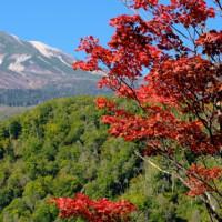 乗鞍高原の紅葉
