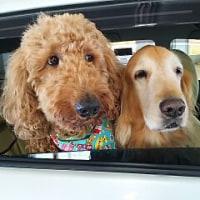 車窓でワクワク~♪