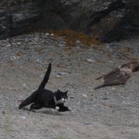 猫VS.トンビ