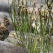 今日もまたコチドリを観察に狭山湖に