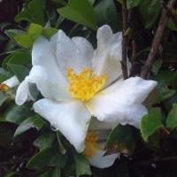 12月の花:2006~まとめ