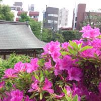 パワースポット 鳩森八幡神社