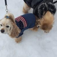 雪まつりのデート