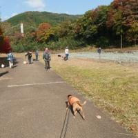 犬さんたちのお散歩会 ~20161117~