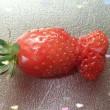 ☆こんなイチゴ初めて見た!☆