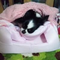 『そこで寝る…』