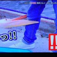6/25 漁師さんと話していたら、ガーが大野君の足にかみついた