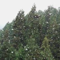 春田起こし(二日目)と雪