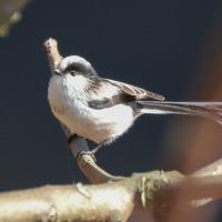 小泉潟公園で野鳥撮影