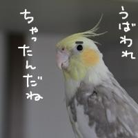 阪神・淡路大震災記念日(1月17日)