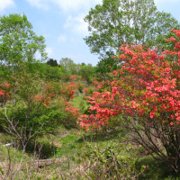八方ヶ原! 花盛りです。