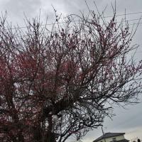 富山にも春一番吹く、一荒れして春来るか