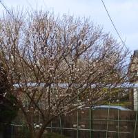 庭木の消毒