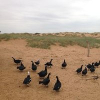 動植物による砂漠化防止