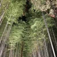 竹林の道(京都)