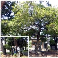 この初夏一番の暑さの日に…(^^♪高槻の古木探索は赤大路の「子安天満宮」と「鴨神社」